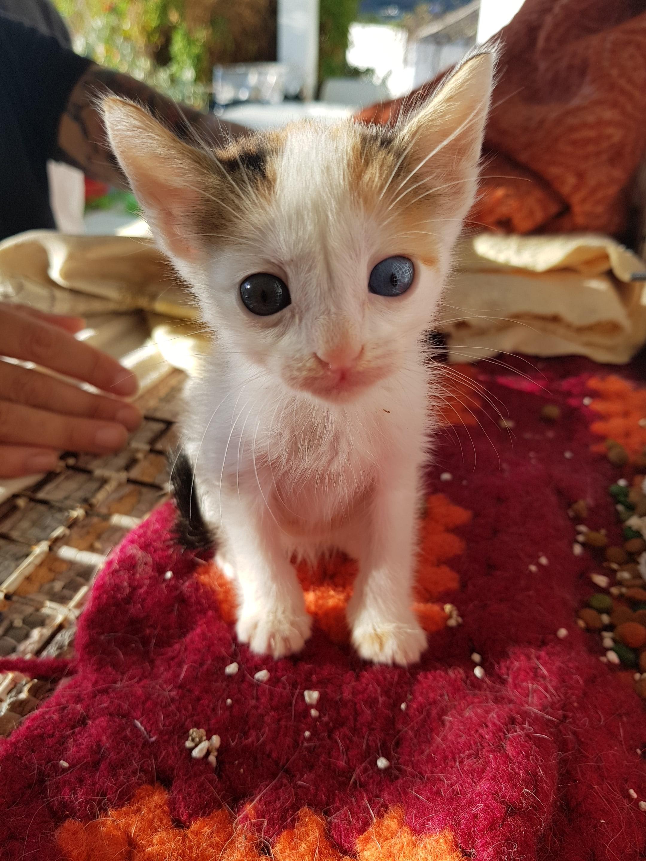 kitten at kini cats